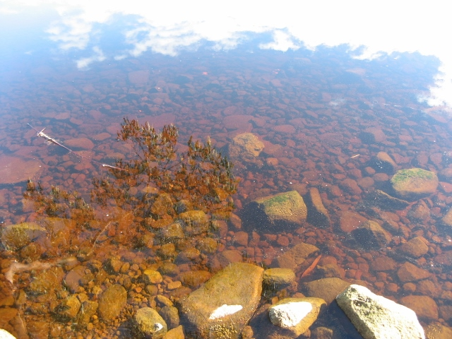 tannin river